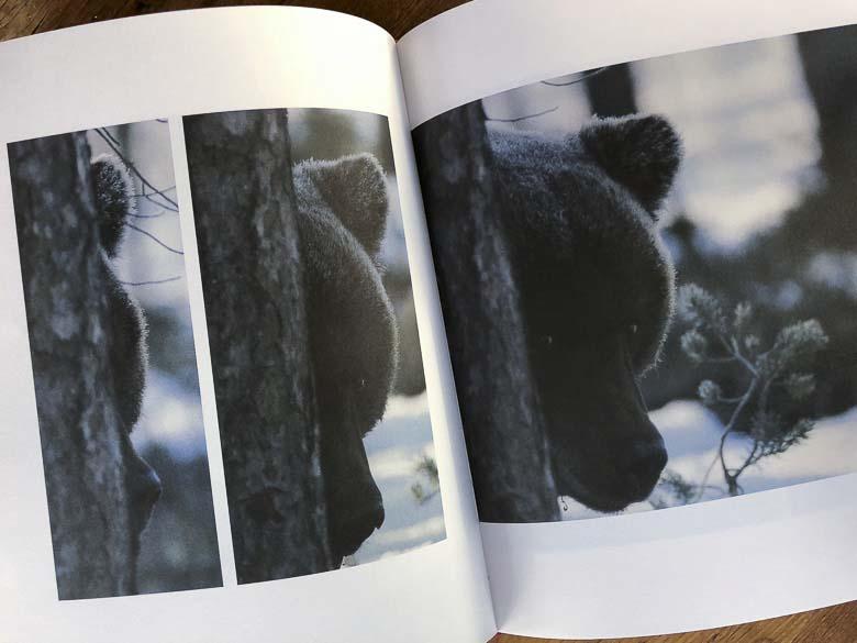 aukeama: karhunpentu kurkistaa puun takaa
